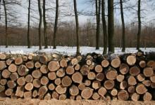 Már kérelmezhető a szociális tűzifa támogatás